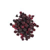 Allnature Blackberry Lyofilized 15 g